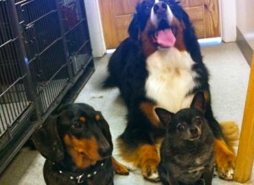 3 Musketeers !!
